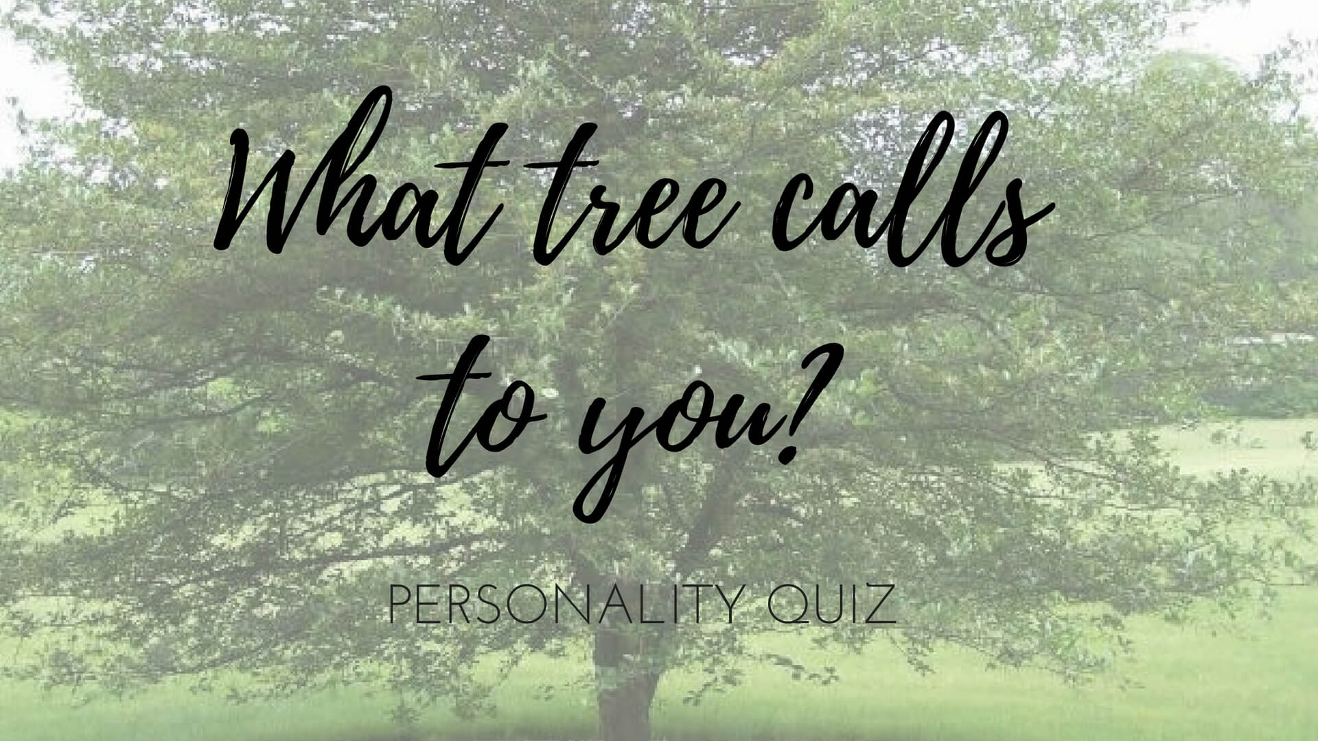 What tree calls to you wild creative biocorpaavc Image collections